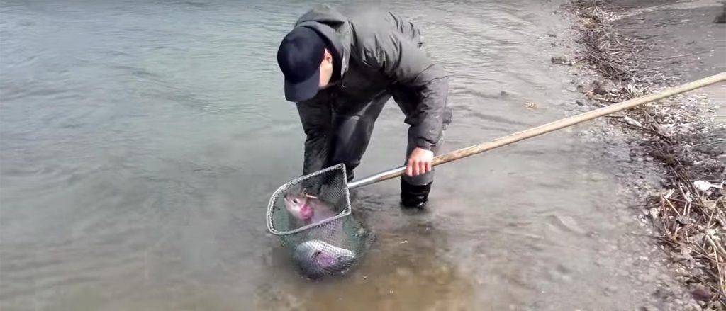 Simons Put & Take - 2,4 Tonnen Forellenbesatz zur Saisoneröffnung